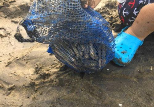 行橋のマテ貝掘りは、採って良し・食べて良しで子供も大喜び 公開しました