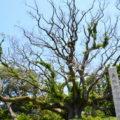 川棚のクスの森~樹齢1000年を超える御神木は一見の価値あり~
