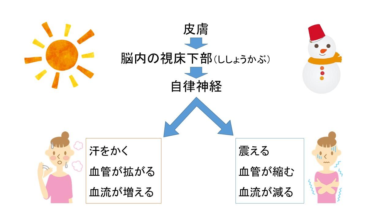 体温調節の仕組み