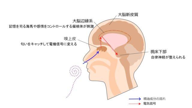アロマセラピーと脳機能